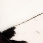 Kuhfell Schwarz & Weiß